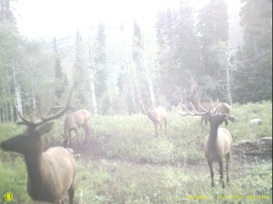 Elk Trail Camera Picture Washed out by sun